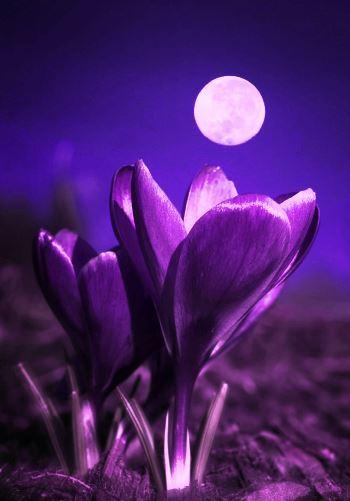 満月の遠隔ヒーリングサークル。